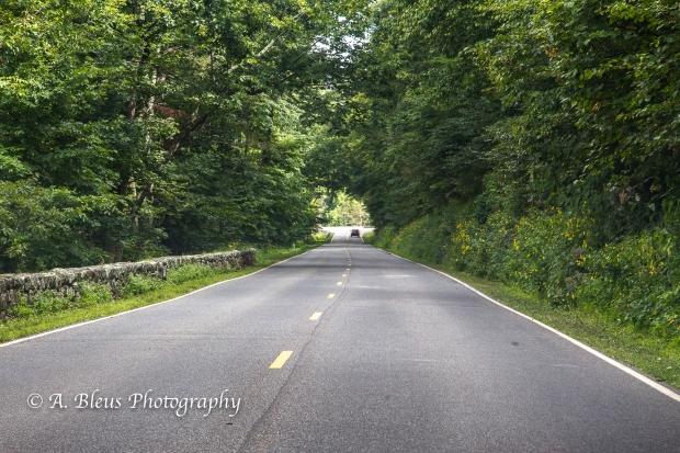 Crossing the Skyline Drive, Shenandoah National Park, Virginia-93E1070