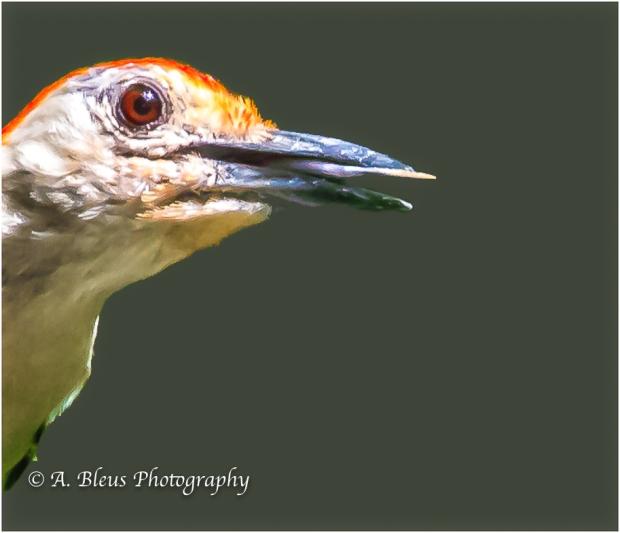 Profile of a Woodpecker, Saluda North Carolina, 93E0554