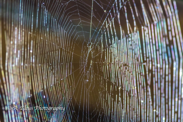 Spider Web, Saluda North Carolina, 93E0732-2