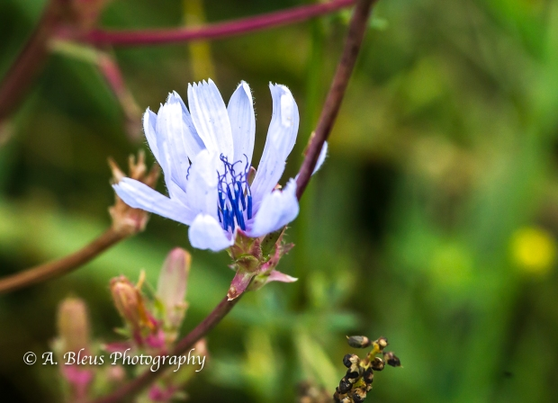 Wildflowers of Shenandoah Nat. Park-Virginia- 93E1130-2