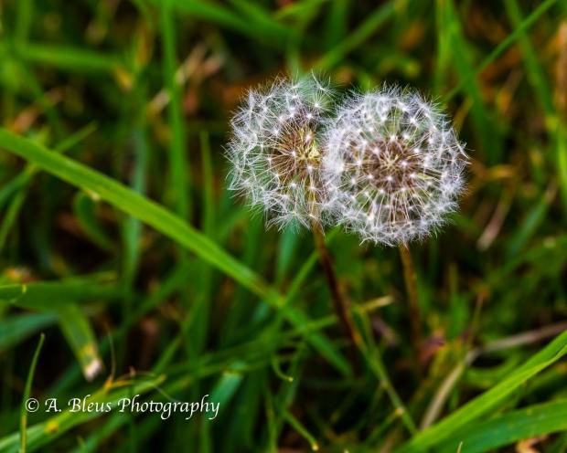 Wildflowers of Shenandoah Nat. Park-Virginia- 93E1130-3