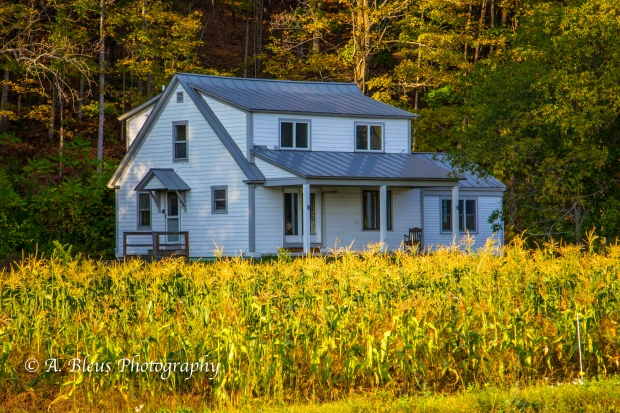 Corn Field and a House, West Woodstock, Vermont-93E1650