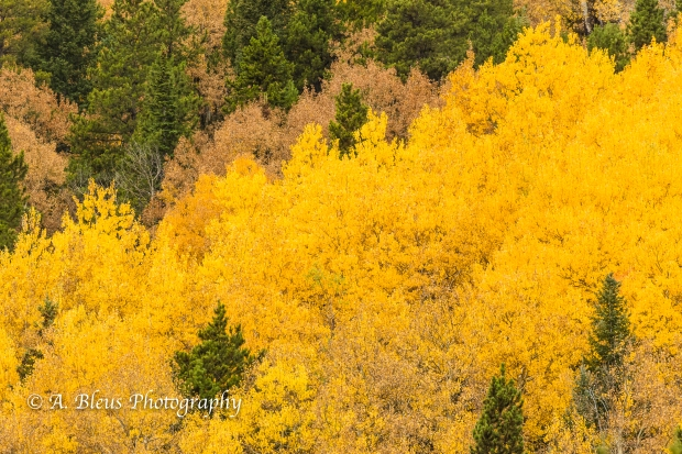Fall Colors in Rocky Mountains Nat. Park, Colorado -93E1950-1