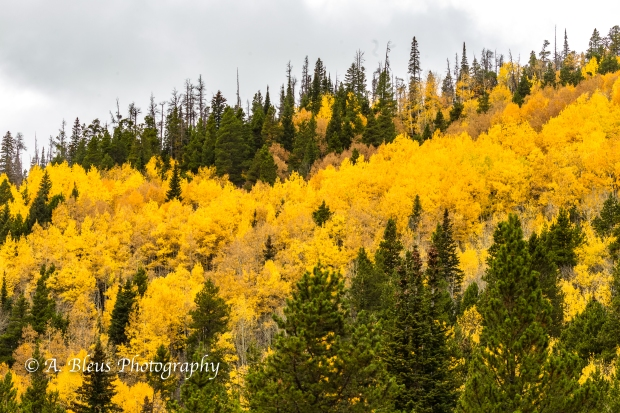 Fall Colors in Rocky Mountains Nat. Park, Colorado -93E1950-2