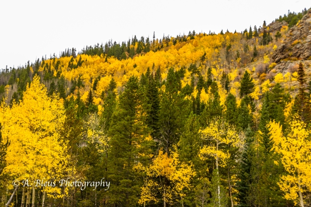 Fall Colors in Rocky Mountains Nat. Park, Colorado -93E1950-4