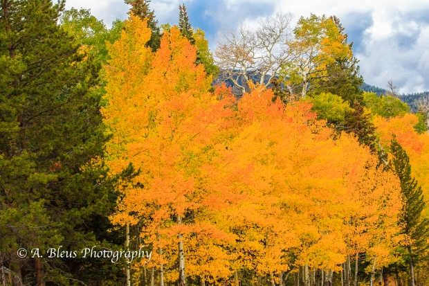 Majestic Rocky Mountains Nat. Park, Colorado -93E2143