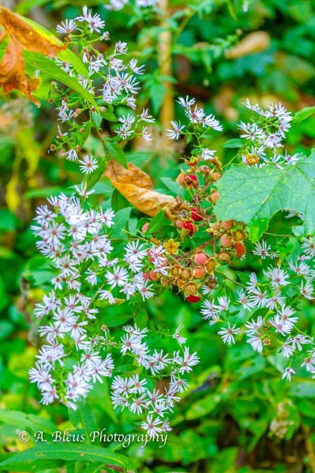 Wild Flowers- Woodstock, Vermont-10
