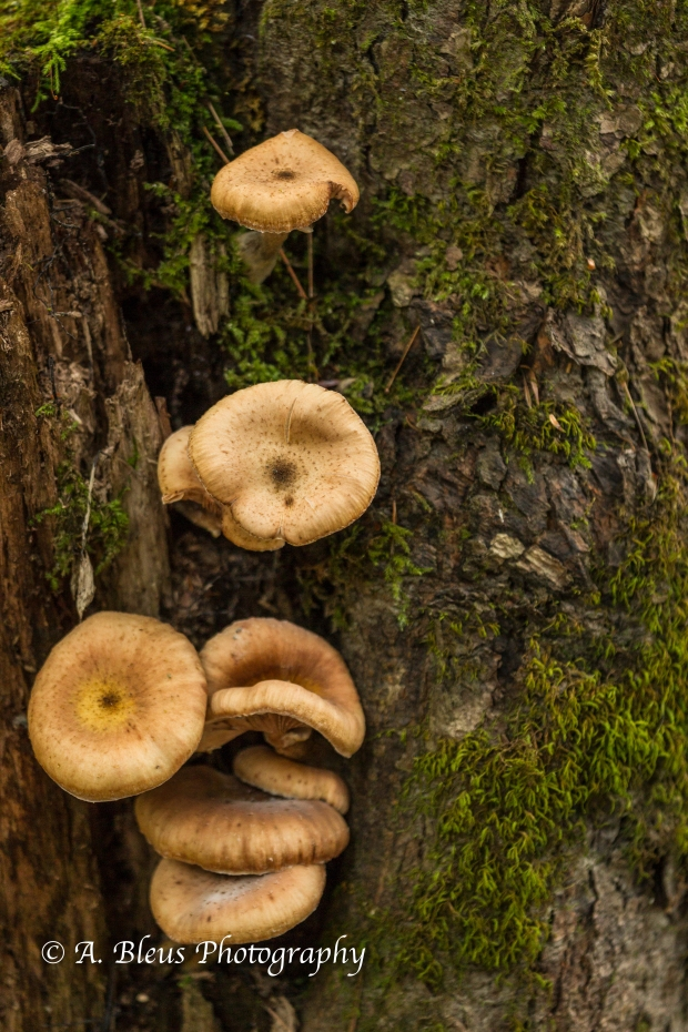 Wild Mushrooms- Quechee Gorge, Vermont-93E1691