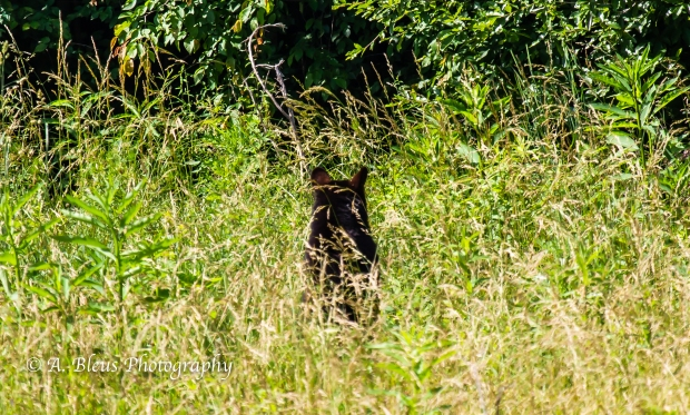 Black Bear No 3_93E0196-2