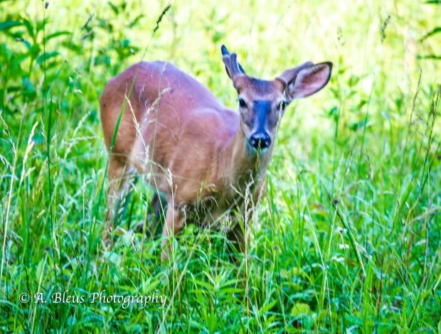 Young Buck_93E0118-3