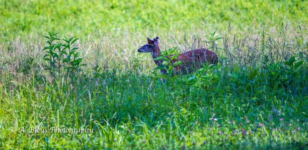 Young Buck_93E0118